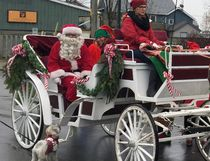 Santa fans come in all shapes and sizes. This little dog catches the attention of Santa and his entourage as they ride in the Christmas festival parade in Port Dover on Saturday. Driving the carriage is Samantha Sowden of Evergreen Hill Farm. Michael-Allan Marion/Postmedia News