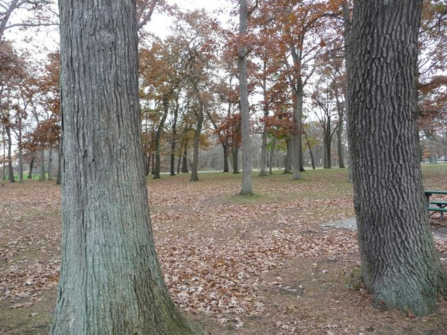 Canatara Park is known for its beautiful oak trees, but gardening expert John DeGroot writes about the potential devastation that the park's oak, and other oak trees in Ontario, could suffer from if a fungus called oak wilt ever crosses the border into the province from Michigan. (John DeGroot photo)