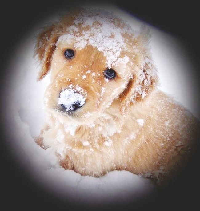 Cute or cold? It's important for dog owners to be mindful of their pet's temperature when heading out into cold weather.