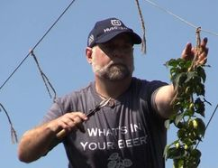 <p>Ron Brennan, at his Old 4th Hop Yard in Williamstown. Brennan has won a regional Premier's Award for Agri-Food Innovation Excellence. </p><p> Handout/Cornwall Standard-Freeholder/Postmedia Network