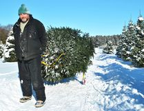 Dan Mielhausen, from Londesborough in Central Huron, carries a tree he cut down at Sloan's Christmas Tree Village in Bothwell back to his vehicle on Dec. 14. Tom Morrison/Postmedia Network