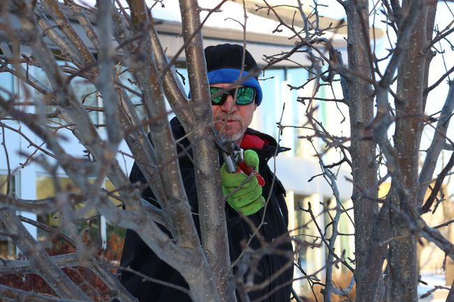 "A Rocha Pembina Valley Interpretive Centre's most recent talk, ""Trees and Their Care,"" explored trees and their characteristics. Professional Winkler arborist David Wallace led the talk on Dec. 16 at Winkler Centennial Library. (LAUREN MACGILL/Winkler Times)"