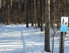 <p>One of the trails at the re-opened Robert Graham Conservation Area in South Dundas, seen on on Sunday, December 31, 2017, in Brinston, Ont. </p><p> Todd Hambleton/Cornwall Standard-Freeholder/Postmedia Network