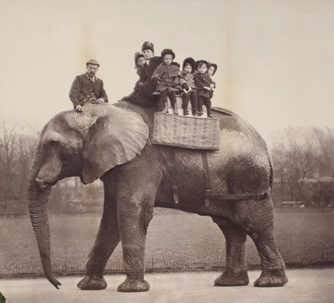 """Jumbo the elephant was killed in St. Thomas when he was struck by a locomotive in 1885, but his death is shrouded in mystery. His life and death are the subject of The Nature of Things with David Suzuki documentary, """"Jumbo: The Life of an Elephant Superstar."""" (Contributed photo)"""