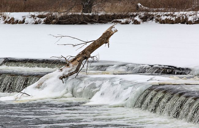 Ice forms on a large tree lodged at Wilkes Dam on the Grand River in Brantford. The Grand River Conservation Authority has issued a flood watch for the entire watershed due to rain and mild weather forecast over the next few days. (Brian Thompson/The Expositor)