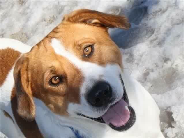 Jordan died from injuries from an attack by two American Bulldogs in the fall of last last year. Jordan's owners and neighbours said the same two dogs viciously attacked a three-year-old boy on Monday. (Tucker Marcolin)