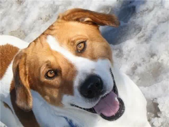 Jordan died from injuries from an attack by two American Bulldogs in the fall of last last year. Jordan's owners and neighbours said the same two dogs viciously attacked a three-year-old boy on Monday.