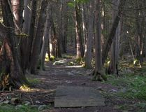 W. BRICE MCVICAR/The Intelligencer Quinte Conservation is looking for trail stewards to assist with the maintenance of trails throughout its 23 conservation areas, such as this one at the Frink Centre. An information session is scheduled for Feb. 28 at the conservation authority's main office.