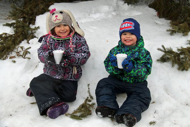 C�LINA IP / DAILY OBSERVER