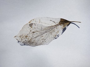 Rob Nelson?s Surviving Winter #3 is a featured work in My Backyard, an exhibition of London photographers at the Westland Gallery.