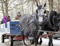 Carriage Driver Phil Wait shuttles visitors around the property. (Chris Funston/Woodstock Sentinel-Review)