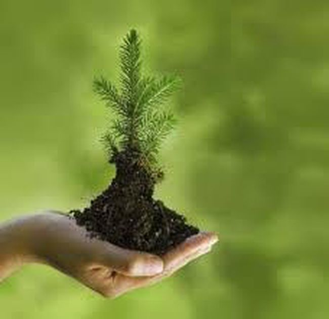 Submitted photo The Hastings Stewardship Council is again providing free seedlings to residents in Hastings County.