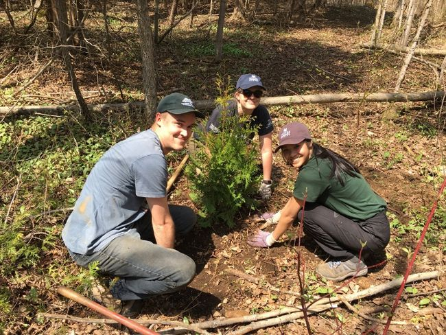 There were 70 trees planted in total at 150-175 cm tall. The species were a mix of serviceberry, white cedar, black cherry, red osier dogwood and blue beech.  (COURTESY OF NCC)