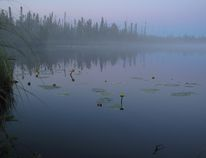 The Birch Mountain Wetlands are shown in a handout photo. Alberta is creating the world's largest boreal forest preserve with the announcement of a series of new wildland parks in the province's northeast. The five new or expanded areas adjoin Wood Buffalo National Park and add up to 13,000 square kilometres of forest, wetland, lakes and rivers.THE CANADIAN PRESS