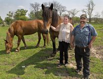 Alice and Terry Stratford spend time with two of their horses, a percheron named Betty (left) and Marcy, a Belgian, at their family farm on Jenkins Road, near Scotland. (Brian Thompson/The Expositor)