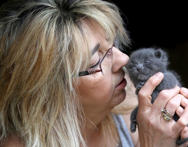 Heather Patterson, a volunteer with For the Love of Ferals,  comforts a three-week-old kitten at a large feral cat population in a barn about 40 kilometres north of Kingston on Friday May 25 2018.  Ian MacAlpine/The Whig-Standard/Postmedia Network