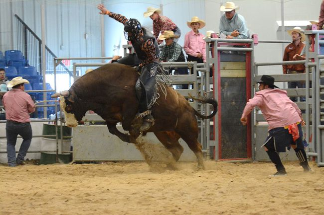 A bull rider hangs on during the Mayerthorpe Rodeo on May 27 (Peter Shokeir | Mayerthorpe Freelancer).