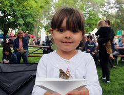 Three-year-old Charlotte Kipp of Paris keeps an eye on a painted lady butterfly on Saturday at Springtime in Paris in Lions Park. One hundred children were given butterflies to release at the event's official opening. Michelle Ruby/The Expositor