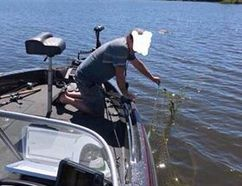 One of two ghost nets were found floating in Lake Nipissing Tuesday containing hundreds of rotting fish.