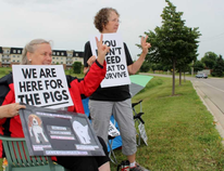 Carla Kuijpers, left, and Pamela Roberts peacefully protest the Ontario Pork Congress on Wednesday, June 20, 2018 in Stratford, Ont. (Terry Bridge/Stratford Beacon Herald)