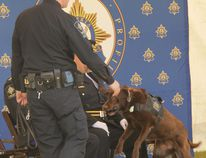 A seasoned search dog, Kai, quickly found a hidden item under the direction of his handler, Shawn McCoy.