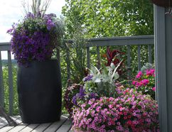 A condo building can be a net contributor to our urban green space when residents maximize the green value of their balconies. (Photo supplied)