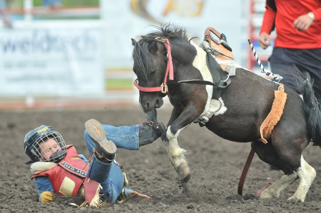 GORDON ANDERSON/DAILY HERALD-TRIBUNE Ryder Topolinski gets dumped off the bronc while participating in the Mini Broncs competition for ages 4-7 at the Teepee Creek Junior Rodeo on Thursday afternoon in Teepee Creek.