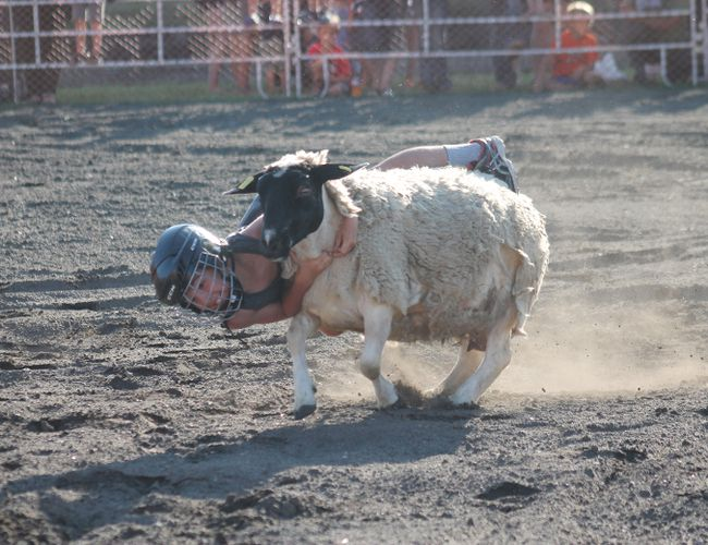 The inaugural mutton busting exhibition was a hit on the first night of the Carman Country Fair. Twelve brave local kids attempted the rodeo-style event on July 12. (EMILY DISTEFANO)