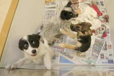 Puppies available for adoption at the Winnipeg Pet Rescue Shelter, as of Feb. 14, 2011. (MARCEL CRETAIN/Winnipeg Sun)