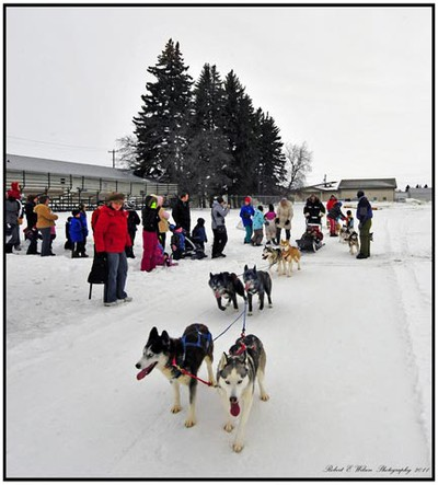 Residents and visitors enjoyed the snowy weather during the Carman Blizzard Fest, an annual event that features dog sleds, winter sports, great views and sleigh rides. (ROBERT E. WILSON/For The Winnipeg Sun)