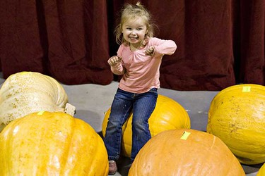 Ashlyn Stang, 2, from Edmonton, plays on some pumpkins during the 22nd annual Great White North Pumpkin Fair and Weigh-off on Saturday, October 2, 2010 in Smoky Lake, Alta. (AMBER BRACKEN/EDMONTON SUN)