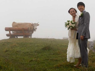Japanese bridal couple Arisa Chi (L) and her new husband Kenji Yoshida standing in front of a cow after their wedding ceremony on the foggy Mount First (2168m/7113ft) in the Swiss Alpine resort of Grindelwald August 6, 2010.   (REUTERS)