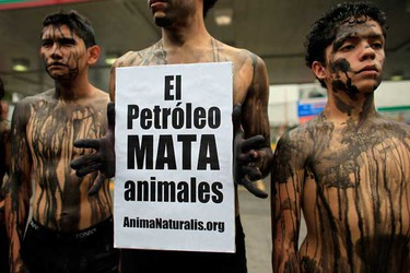"""AnimalNaturalis activists, with their body covered in fake oil, take part in a protest in Mexico City July 22, 2010. The activists protested against the BP oil spill in the Gulf of Mexico. The banner reads, """"The oil kills animals."""" (REUTERS)"""