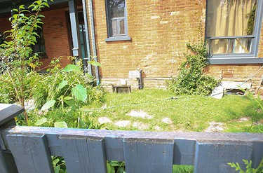 Another home on Rose Ave. south of Parliament and Wellesley Sts. had a large hogweed plant growing along its fenceline. Inspectors showed up later to removed the noxious plant. (JACK BOLAND, Toronto Sun)
