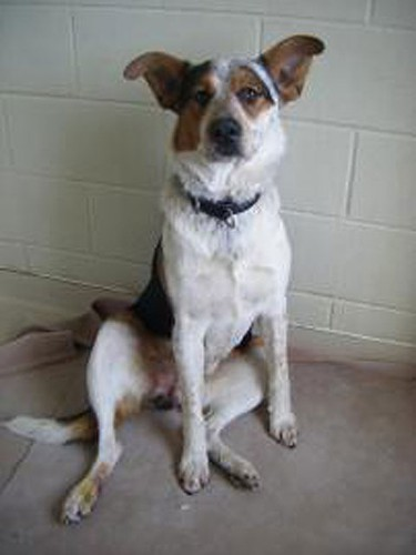 Bandit was on the adoption list at the OSPCA in April. The OSPCA says it will have to euthanize all the animals in its shelter except for two turtles - 350 animals in total - at its York Region shelter because of a ringworm epidemic.