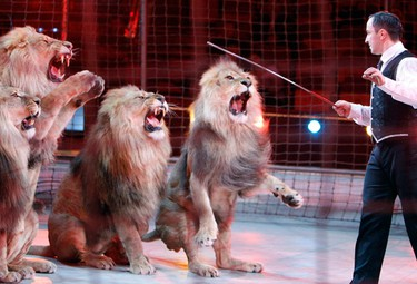 Ukrainian circus artist Vladislav Goncharov performs with his male lions during the dress rehearsal of the International Circus Festival in Budapest January 21, 2010. The festival will run from January 21-25.  (REUTERS)