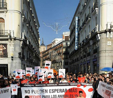 """Naked protesters covered with fake blood take part in a protest, organized by Equanimal, in favour of animal rights at Madrid's Puerta del Sol on Dec. 12, 2009. The banner reads, """"Animal Rights Now.""""  (REUTERS)"""