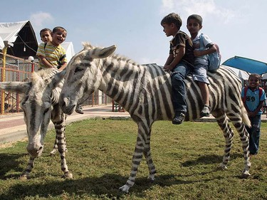 Palestinian boys ride dyed donkeys at Marah Land zoo in Gaza City October 8, 2009. Two white donkeys dyed with black stripes delighted Palestinian kids at a small Gaza zoo on Thursday who had never seen a zebra in the flesh. A genuine zebra would have been too expensive to bring into Israel-blockaded Gaza via the smuggling tunnels under the border with Egypt, said zoo owner Mohammed Bargouthi. REUTERS/Mohammed Salem