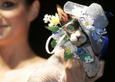 A cat wears an attire by a designer during the Pets Fashion Week Russia in Moscow, May 31, 2009. ALEXANDER NATRUSKIN/REUTERS.