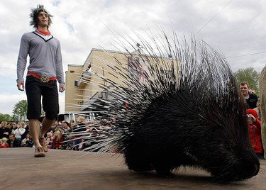 A model walks behind a porcupine during the Defile.zoo fashion show at the zoo in St. Petersburg on May 24, 2009. The show featured creations by local designers who promoted clothes made out of natural materials and without the use of fur.  (REUTERS)
