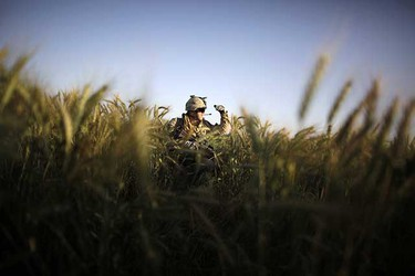 May. 17: A Canadian soldier advances in a wheat field during a special operation at Sanjaray in Kandahar Province. More than a thousand soldiers from the Canadian, U.S. and Afghan armies took part in an anti-Taliban operation at Sanjaray over the weekend.(REUTERS/Jorge Silva)