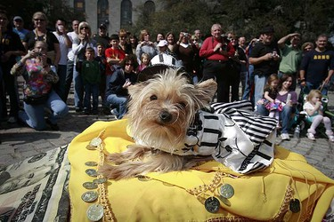 "A dog named Ooh La La rides on a float named ""Slumdog Millionaire"" during the Krewe of Barkus Mardi Gras parade in the French Quarter of New Orleans Feb. 15, 2009. (REUTERS)"