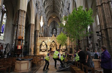 Workers put up an English field Maple tree in preparation for the Royal wedding in Westminster Abbey in London, April 26, 2011. (REUTERS/Sang Tan/Pool)