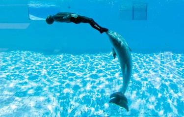 Simone Arrigoni of Italy attempts to set an apnea diving record, pushed by two dolphins named  Paco and Marco, in Torvaianica near Rome May 19, 2011. Arrigoni completed 13 loops in 1 minute and 53 seconds to set a new record. (REUTERS/Alessandro Bianchi)