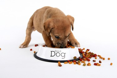 What do you feed your dog? Table scraps must be part of the equation, whether you like it or not. But our survey focuses on store-bought food. Half of Canadians insist upon specialty dry kibble (50.5%). Nothing but the best for their hounds, even if they can't say the same for themselves. A third (34.9%) provide regular dry food. Opting for the wet stuff is less popular (14.3%). Thankfully, that leaves just 3.8% who go the discount route. People, the cheap stuff is all corn filler! Trust us, you'll be thankful for any upgrade whenever it's time to poop 'n scoop.
