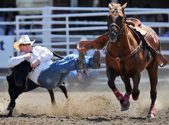 Straws Milan of Cochrane, Alta., wrestles a steer in the first round of the steer wrestling event during the Calgary Stampede rodeo finals, July 17, 2011. Milan went on to win the event. REUTERS/Todd Korol