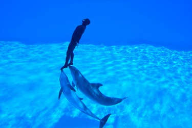 Italy's Zoomarine is home to several acrobatic dolphins who have set records, including the one pictured here where a diver performed 13 back-to-back underwater circuits under dolphin power. (Shutterstock)