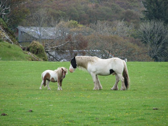 Island pony and horse are pals on a hillside meadow. Ian Robertson/QMI Agency