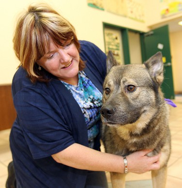 City of Winnipeg Animal Services adoption and community education co-ordinator Lorna Verschoore plays with Pierce, a one-and-a-half-year-old elkhound mix who is up for adoption from the City of Winnipeg's animal services agency. He was found lost on the street without a licence. JASON HALSTEAD/WINNIPEG SUN QMI AGENCY