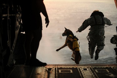 A U.S. Army soldier with the 10th Special Forces Group and his military working dog jump off the ramp of a CH-47 Chinook helicopter from the 160th Special Operations Aviation Regiment during water training over the Gulf of Mexico as part of exercise Emerald Warrior 2011 in this U.S. military handout image from March 1, 2011. The New York Times and other United States media have reported that a military canine accompanied Navy SEAL Team Six commandos into a compound in Abbottabad, Pakistan in a raid that killed al Qaeda leader Osama bin Laden. REUTERS/Manuel J. Martinez/U.S. Air Force/Handout